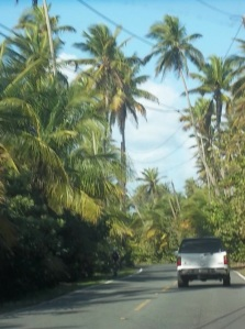 Driving across the jungle thicket of the island.