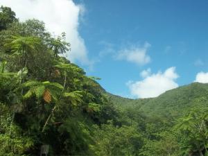 The El Yunque rain forest on a rare non-rainy day!