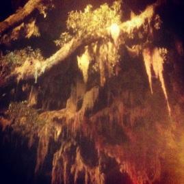 The Spanish Moss adds to Savannah's eery charm!